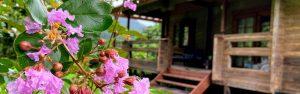 別荘暮らし花