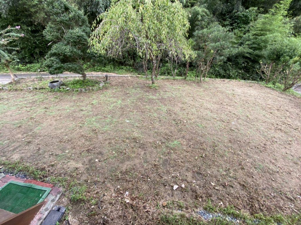 ホワイトクローバーを植えた結果5日後